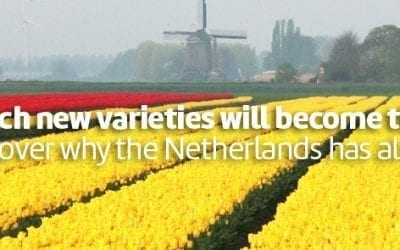 Tulip sales becoming more international and drawing larger public to Tulip Trade Event