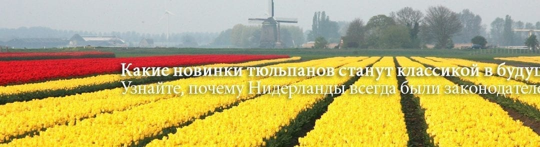 Tulip Trade Event становится все важнее для принятия решений о выборе сортов