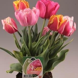 Haakman Flowerbulbs magazijn