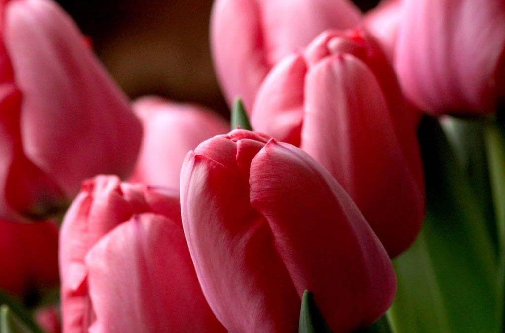 Юбилейный выпуск Tulip Trade Event перенесен на 2022 год