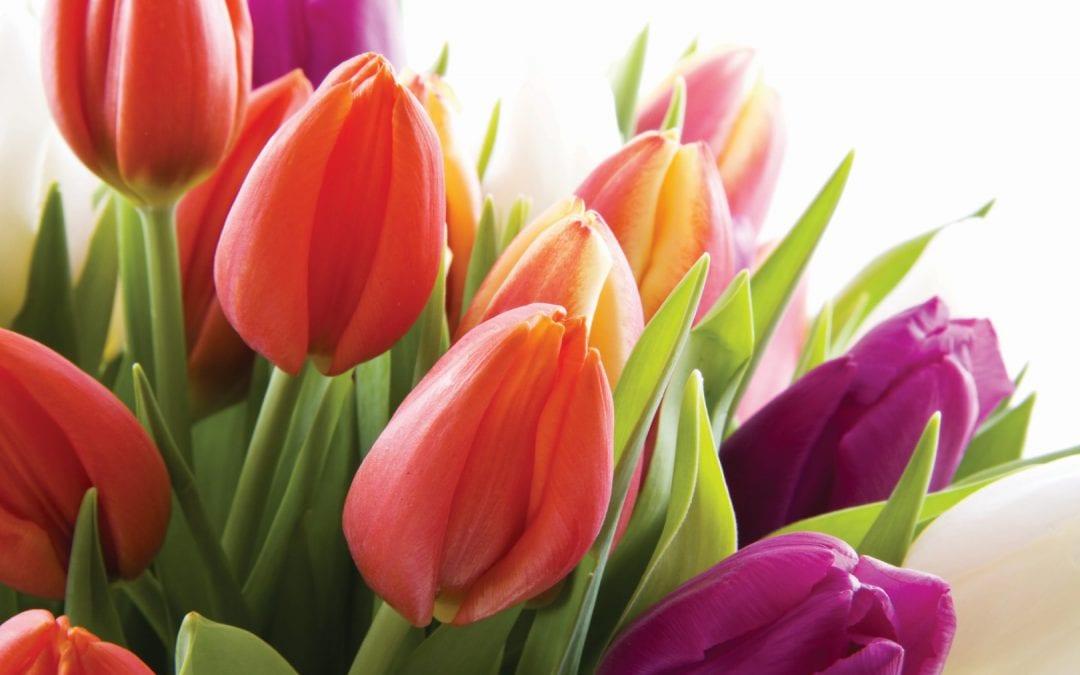 Tulip Trade Event steeds belangrijker ijkmoment voor soortenkeuze