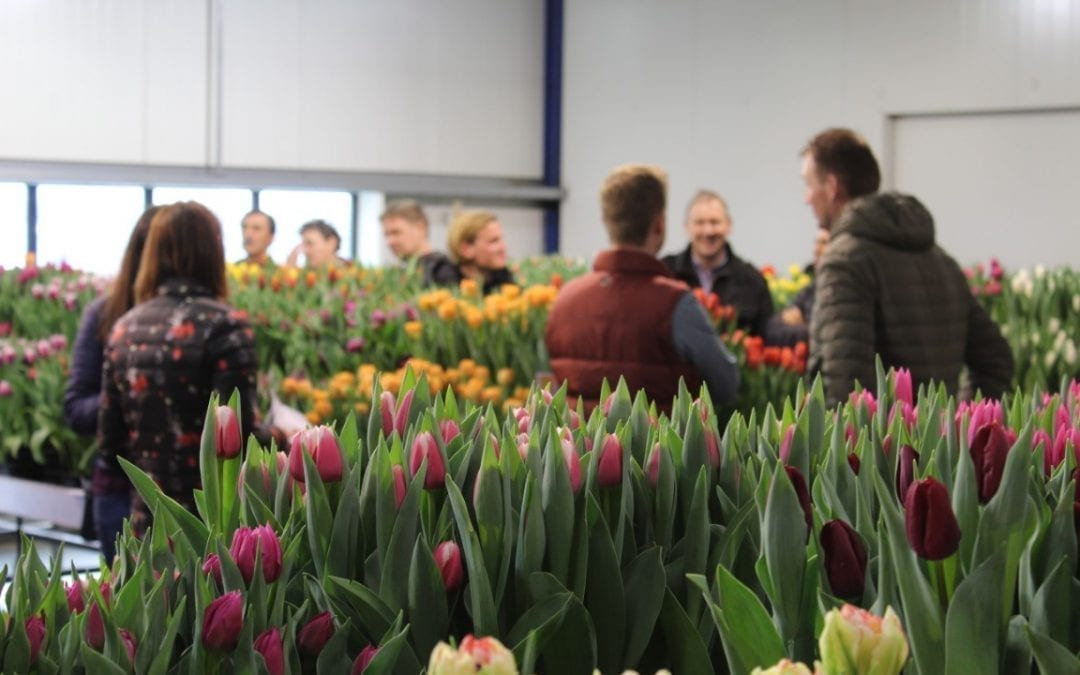 Tulip Trade Event cancelled due to coronavirus