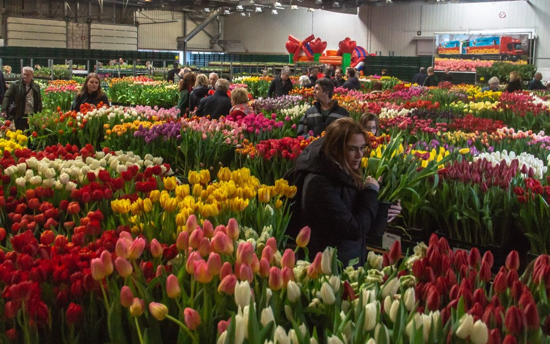Tulip Trade Event celebrates its first lustrum