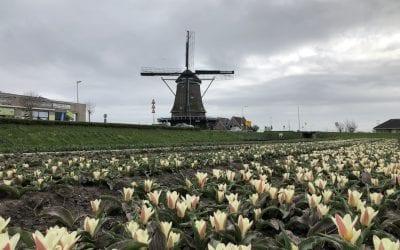 На Tulip Trade Event фирмы представляют много новинок!